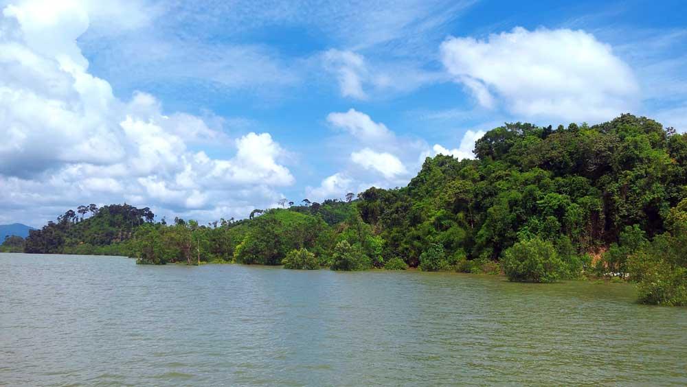 Koh Kho Khao mangroves