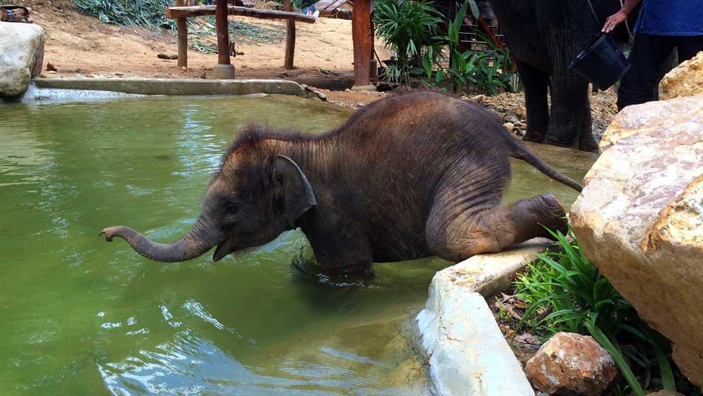 Baby elephant bath time