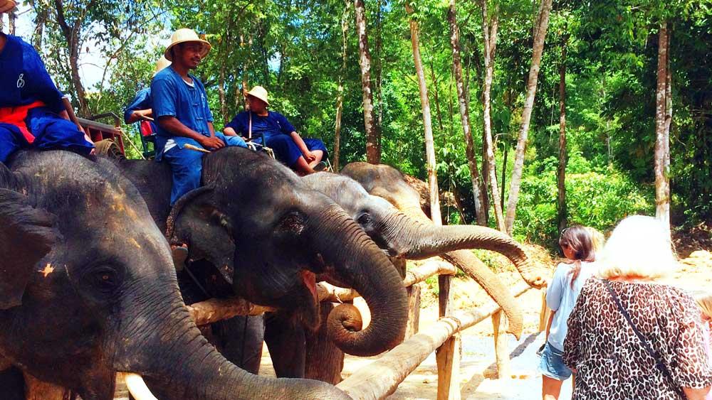 Elephants meet the guests