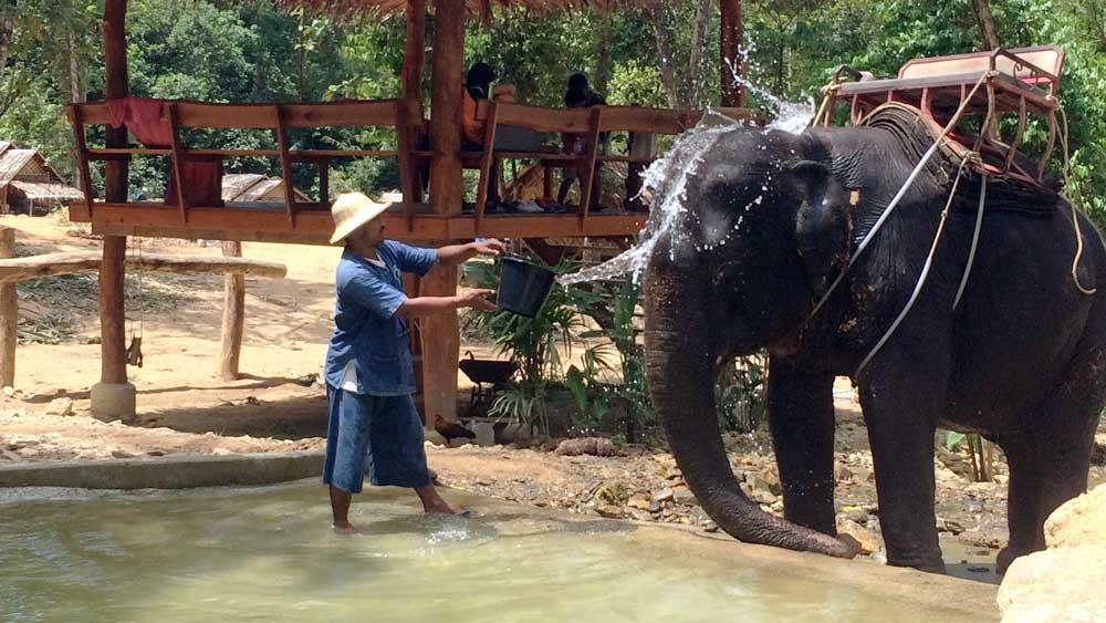 Refreshing the elephant