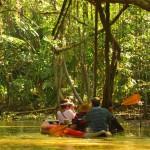 Kayaking on the Little Amazon
