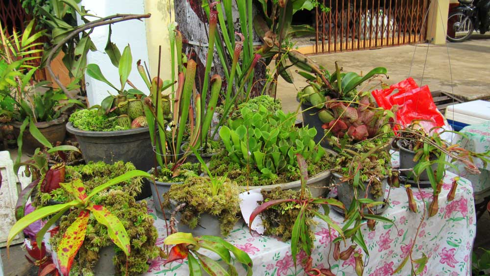 Plants for sale at the market