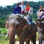 Elephant on Khao Sok Safari