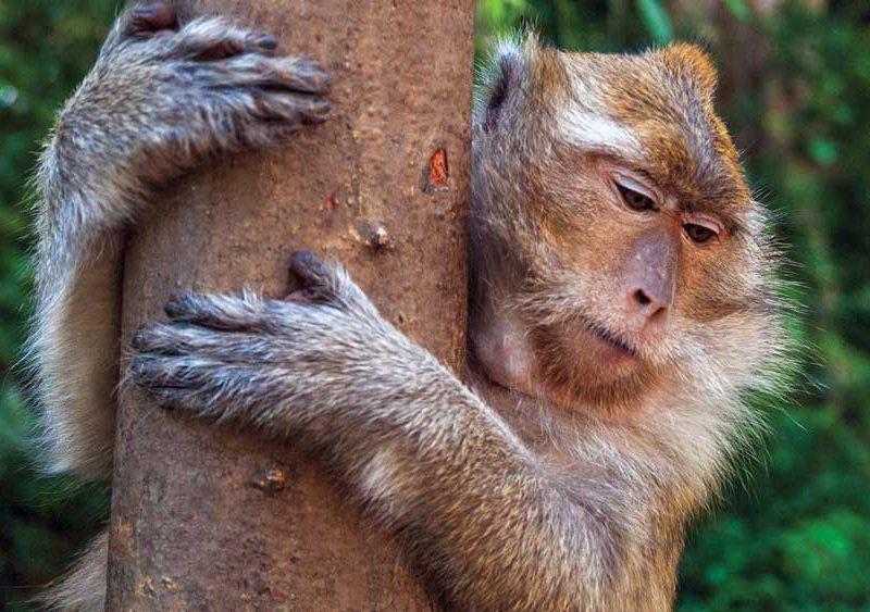 Primate at Khao Sok National Park