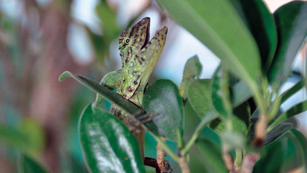 A lizard at Chieow Lan Lake
