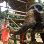 Girl feeding an elephant