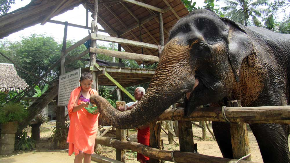 Girl feeding an elephant