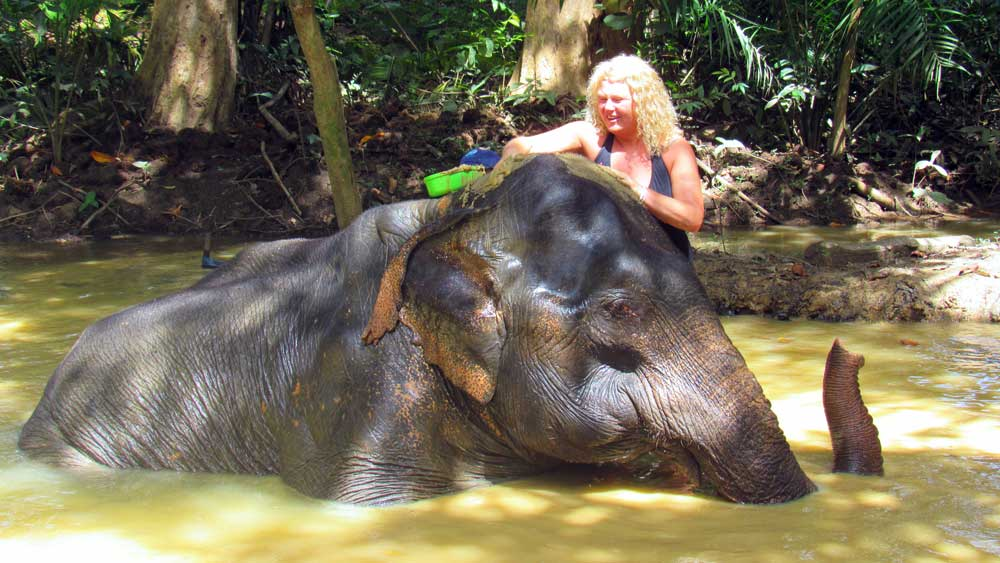 Animal friendly elephant bathing