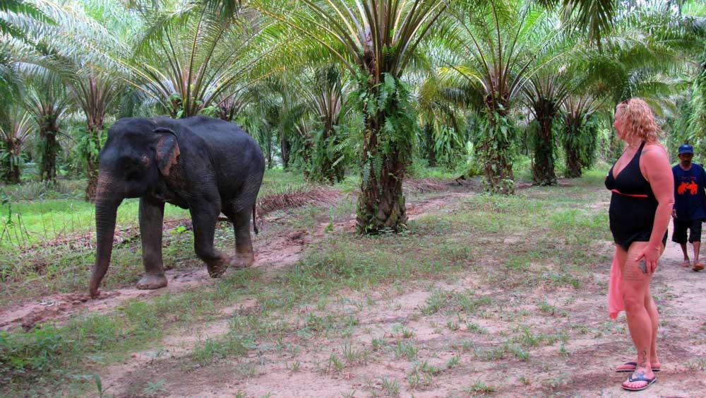 Animal friendly elephant camp