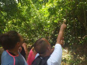 Spotting wild monkeys in Khao Sok's wild jungle