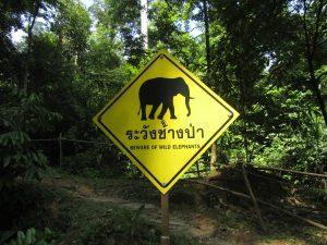 Be aware of wild elephants ;)