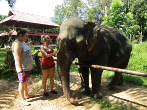 guests feeding elephant khao sok